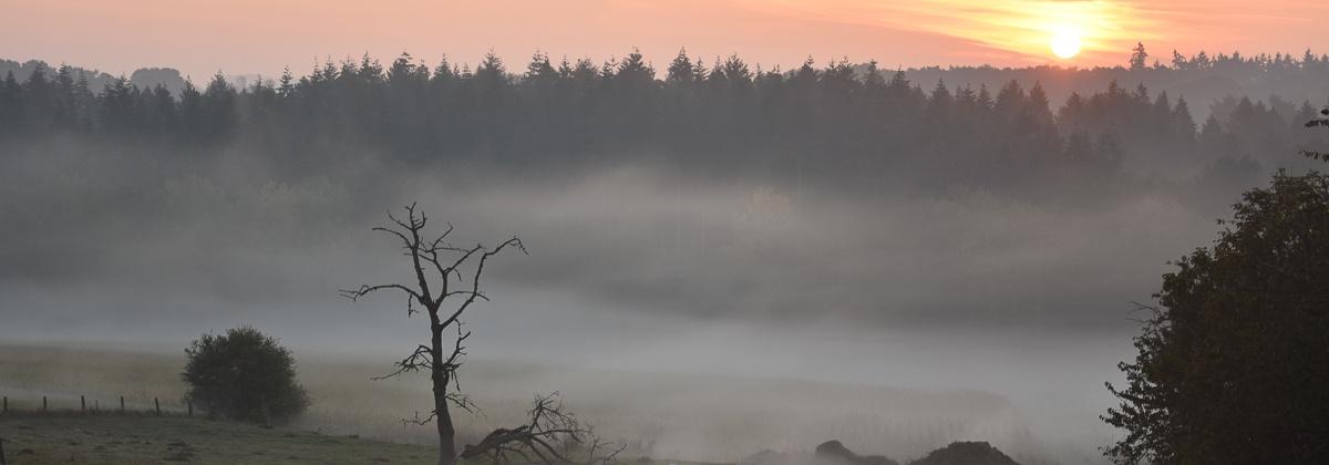Mistige morgen in het Hallerbos vanuit Plattesteen 11